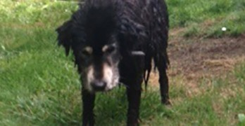 Wash. Firefighters Rescue Dog Trapped in Swamp