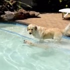 It's Pool Day for the Dogs