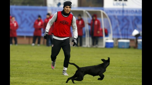 Peruvian player Paolo Guerrero attempts to catch the dog.