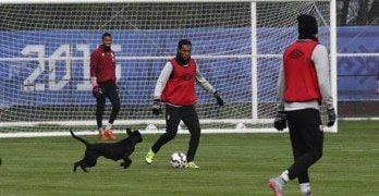 Stray Dog Interrupts Soccer Practice
