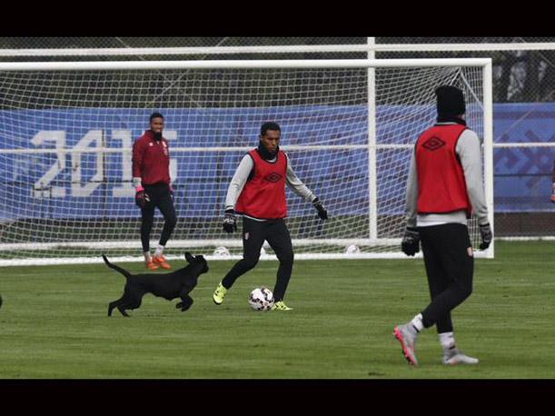 Stray Dog Interrupts Soccer Practice