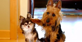 Video: Guilty Dogs