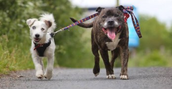 Blind Dog and His Guide Pal Need Forever Home