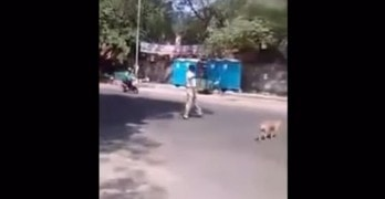 Man Helps Stray Dog Cross the Road
