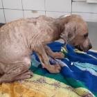 Puppy Found in Garbage Has Amazing Transformation