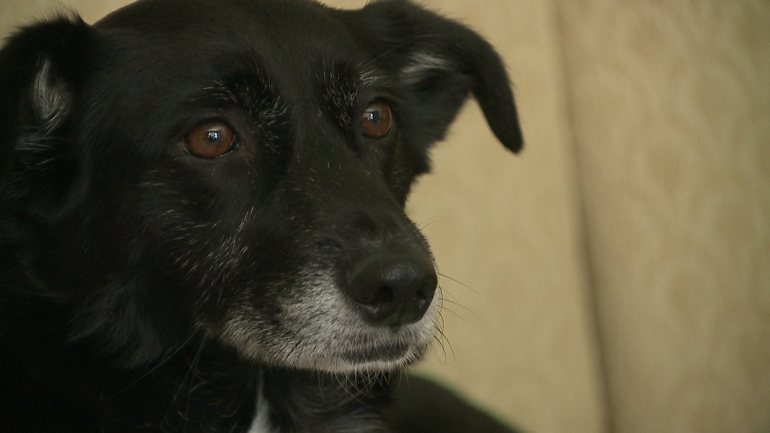 Community Helps Find Airman's Lost Dog After Relocating from Abroad