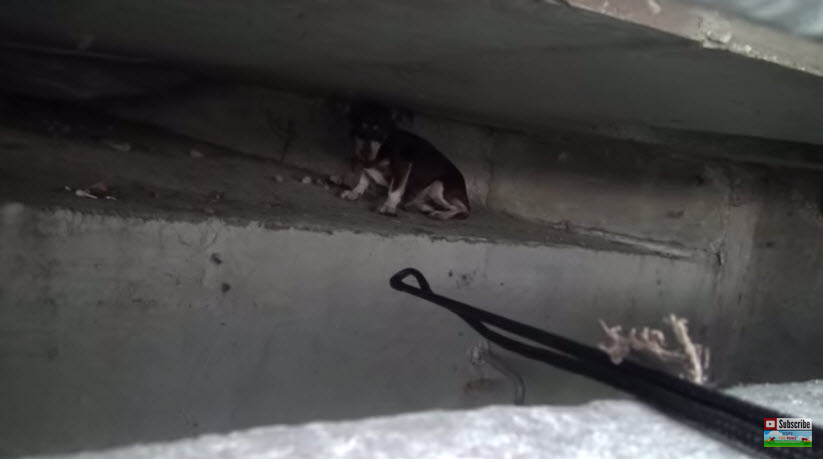 Rescuers Save Dog Hiding in Underground Sewer System