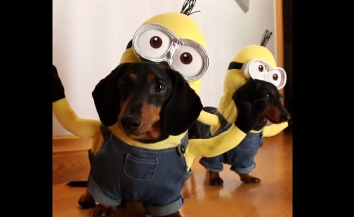 Minions Wiener Dog Edition