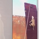 How High Can a Dog Jump?