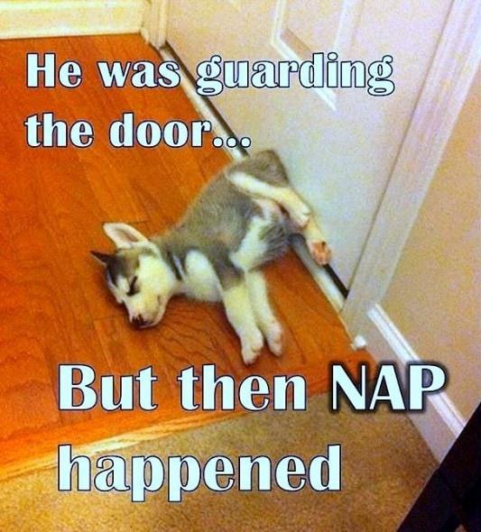 5.31.15 - Puppies Sleeping in Things11