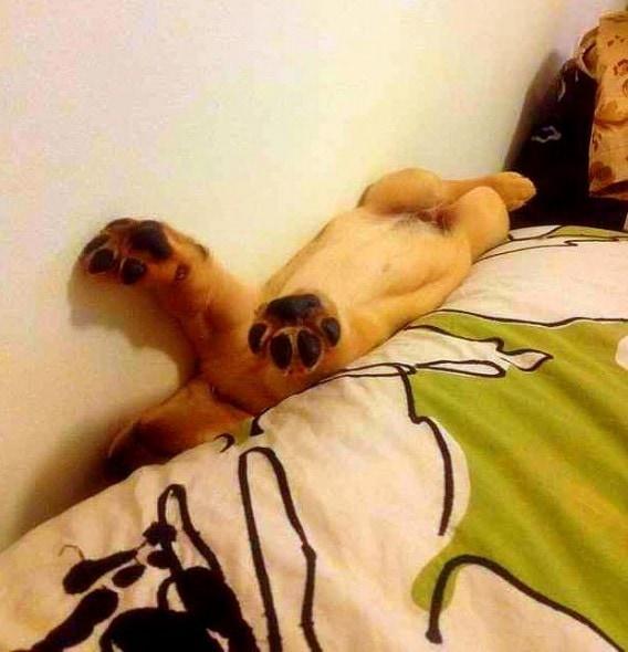 5.31.15 - Puppies Sleeping in Things15