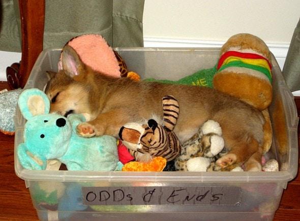 5.31.15 - Puppies Sleeping in Things17