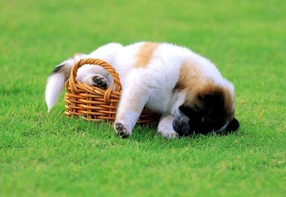 5.31.15 - Puppies Sleeping in Things2