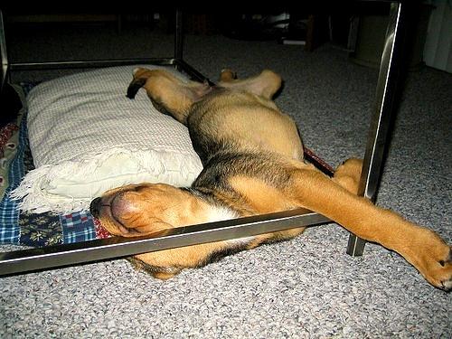 5.31.15 - Puppies Sleeping in Things22