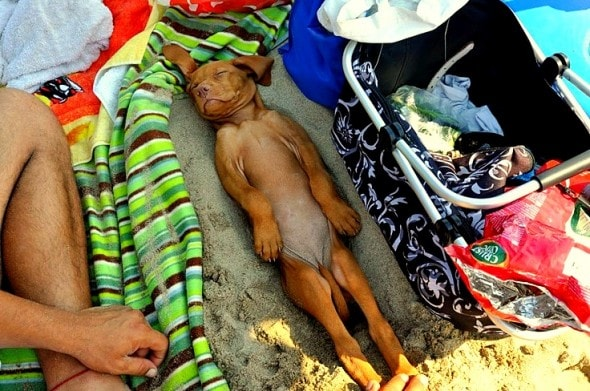5.31.15 - Puppies Sleeping in Things26