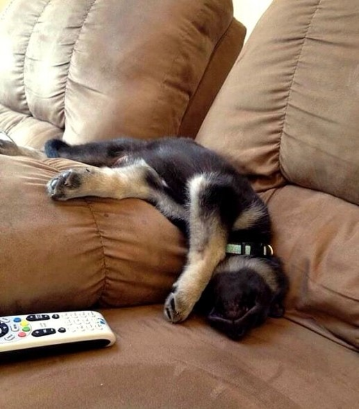 5.31.15 - Puppies Sleeping in Things29