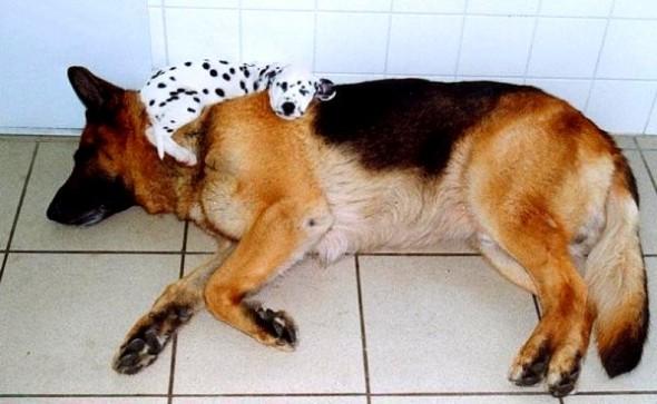 5.31.15 - Puppies Sleeping in Things30