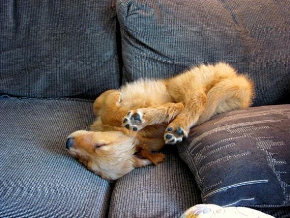5.31.15 - Puppies Sleeping in Things32