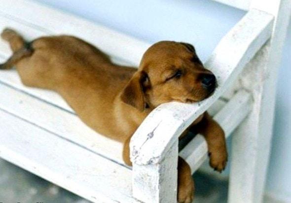 5.31.15 - Puppies Sleeping in Things5