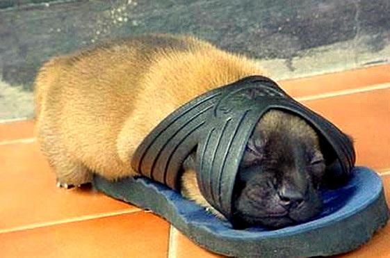 5.31.15 - Puppies Sleeping in Things8