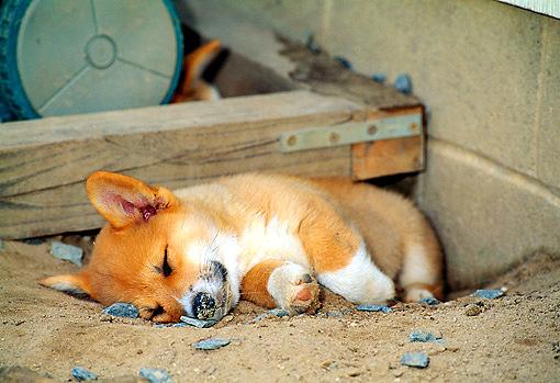 5.31.15 - Puppies Sleeping in Things9