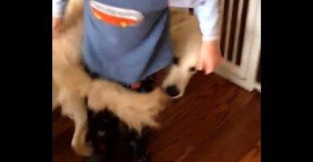 Dog Has An Awesome Way to Hug His Favorite Kid