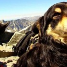 Abandoned Dog Heroically Rescued from Poland's Highest Mountain