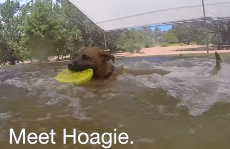Hoagie Is Looking for Love This Summer