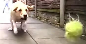 Dogs That Are Bad at Fetch