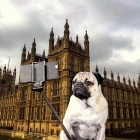 Nine Things You Shouldn't Do on Instagram… Unless You're a Pug