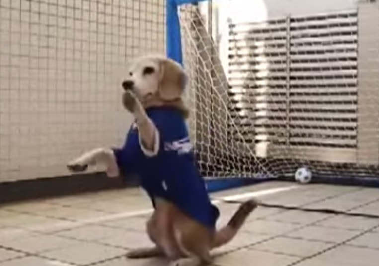 World Cup Pup