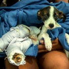Animal Control Officer Pays for Burned Puppy's Care