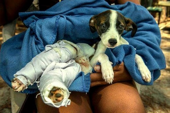 6.17.15 - AC Officer Pays for Burned Puppy's Care1
