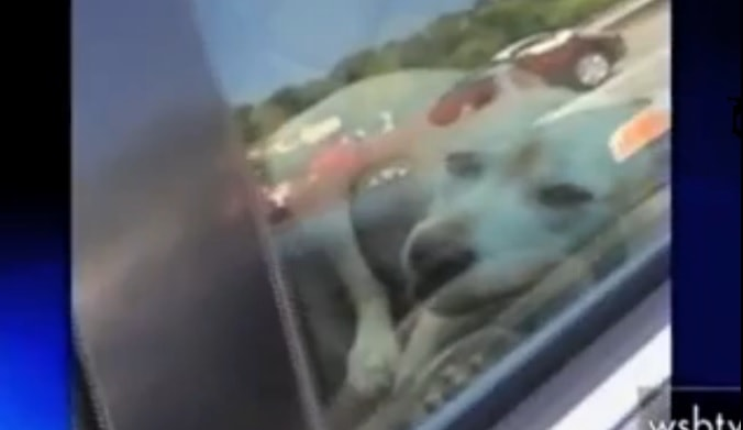 Police Break into Hot Car to Rescue Dog from Overheating