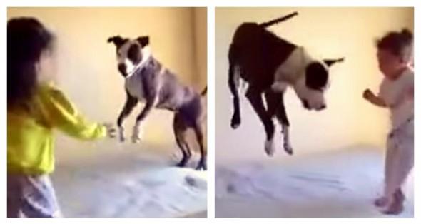 6.20.15 - Dogs Imitating1