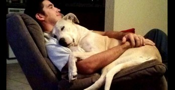 32 Dads Who Absolutely Adore Their Dogs