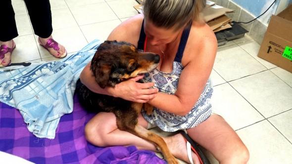 6.21.15 - Street Dog with Tumor4