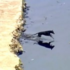 Brazilian Dog Cleans Up Canal