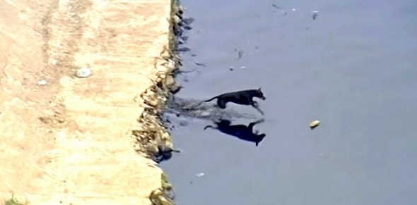 6.3.15 - Brazilian Dog Cleans Up Canal