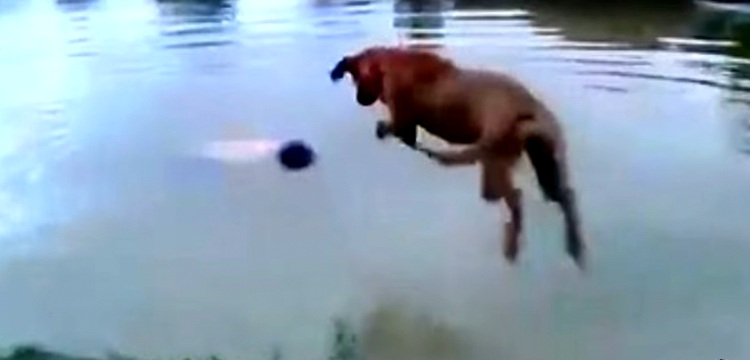 "Loyal Dog Saves ""Drowning"" Owner"