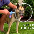 Dirty Dog?  Get a Woof Washer!