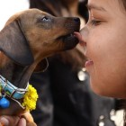 Nepal Festival Celebrates Sanctity of Dogs' LIVES