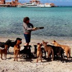 Couple Spends Vacation Rescuing 34 Homeless Animals
