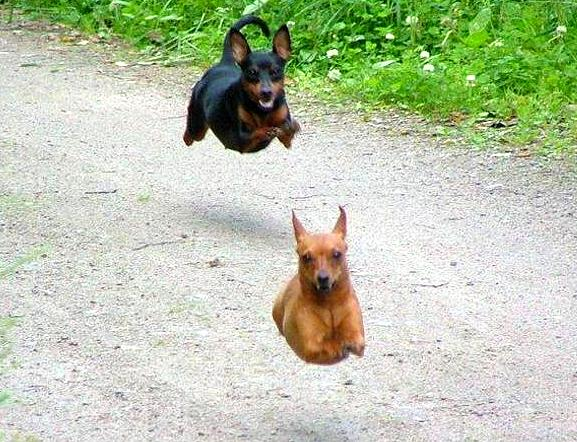 30 Perfectly Timed Photos Of Dogs