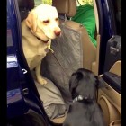 Polite Dog Helps Other Dog Out of Car