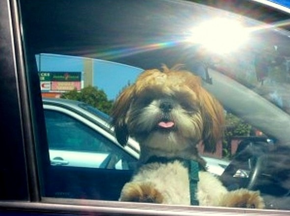 6.7.15 - Law to Save Dogs in Hot Cars0