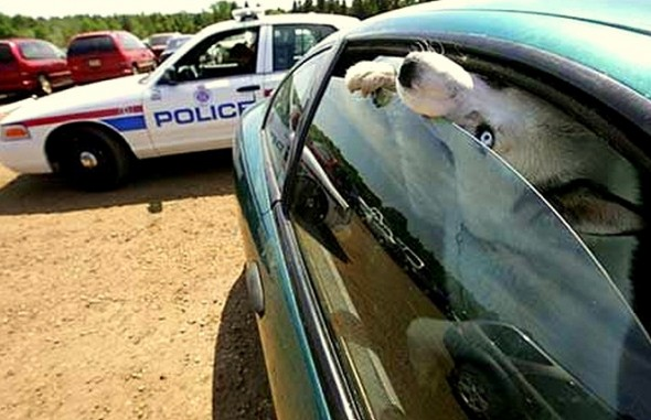 6.7.15 - Law to Save Dogs in Hot Cars2