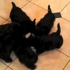6.8.15 - Puppy Pinwheel
