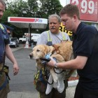 Service Dog Jumps in Front of Bus to Save Blind Human
