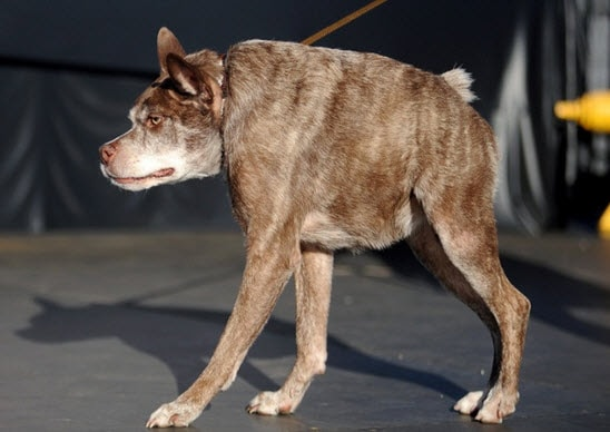 Meet Quasi Modo, the World's Ugliest Dog